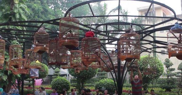 Độc đáo cafe chim cảnh giữa phố Sài Gòn