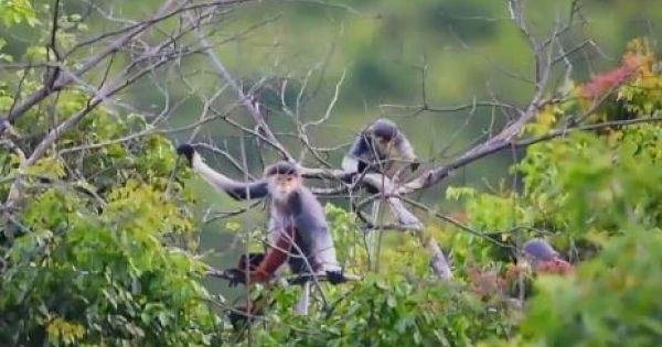 Báu vật thiên nhiên ở bán đảo Sơn Trà, Đà Nẵng