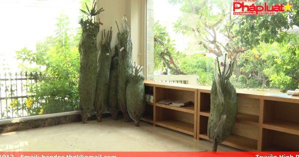 Người dân chi tiền triệu để săn cây thông noel thật từ Đan Mạch
