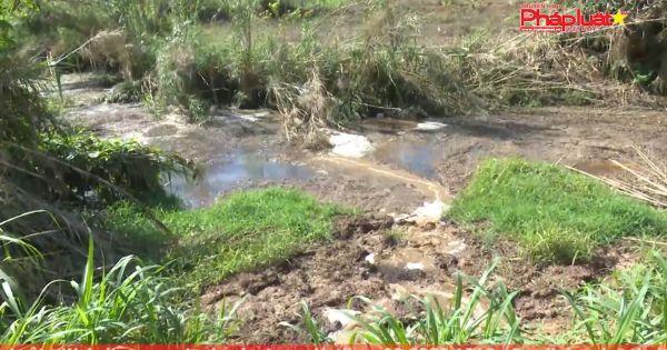 Mộc Châu đình chỉ hoạt động cơ sở sản xuất dong riềng gây ô nhiễm môi trường