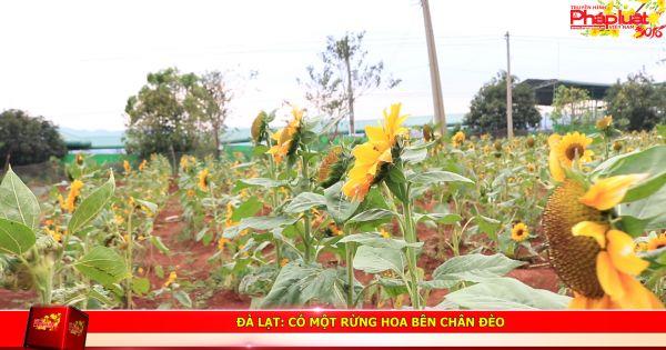 Đà Lạt: Có một rừng hoa bên chân đèo Tà Nung