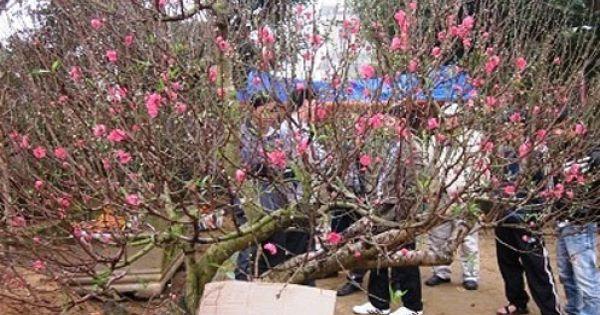 Điểm báo 31/01/2018: Dân buôn đào hét giá cao ngất