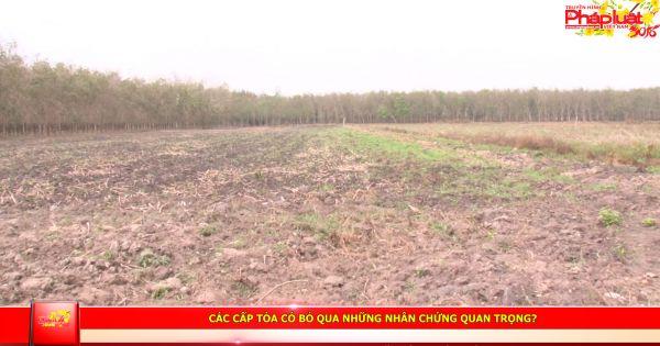 Huyện Tân Châu – Tây Ninh: Các cấp tòa có bỏ qua những nhân chứng quan trọng?