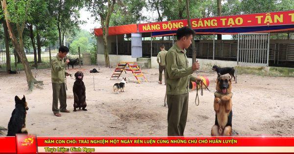 Năm Mậu Tuất: Trải nghiệm một ngày rèn luyện cùng những chú chó huấn luyện
