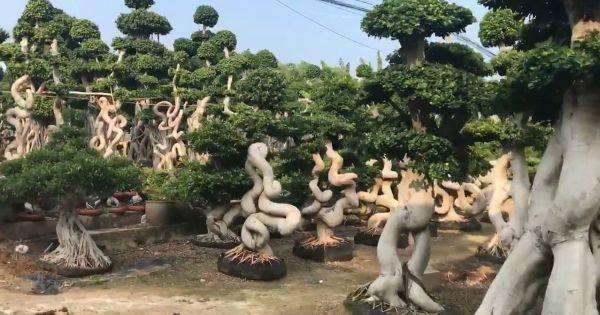 Đi thăm vườn cây đẹp như trong mơ ngoài đời thực