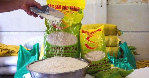 Cấp chứng nhận chuẩn hữu cơ quốc tế đối với gạo ST24