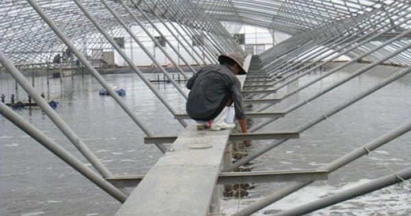 Bạc Liêu khát vọng thành trung tâm ngành công nghiệp tôm
