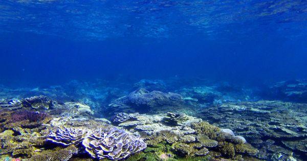 Về Gành Yến ngắm san hô qua làn nước trong vắt
