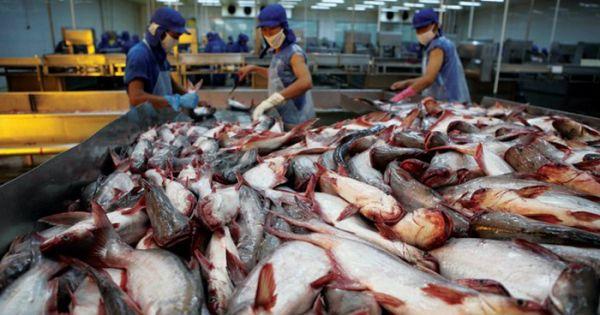 Điểm báo 13/05/2018: Vi phạm trong lĩnh vực chăn nuôi thủy sản có thể bị phạt tới 200 triệu đồng