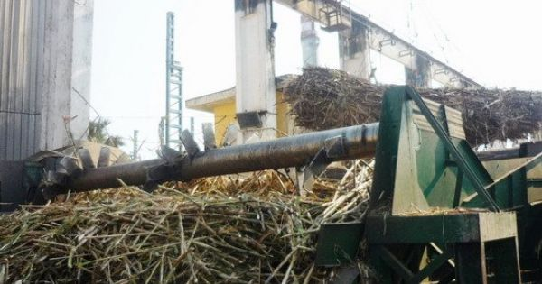Xả thải ra sông, Công ty CP Đường Bình Định bị phạt 1,9 tỉ đồng