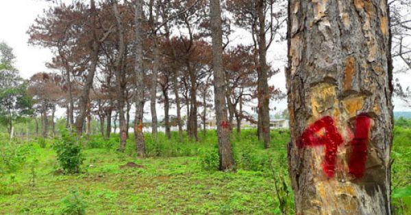 Gia Lai: Khởi tố 4 đối tượng sai phạm tại Ban Quản lý rừng phòng hộ Bắc Biển Hồ