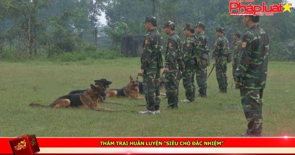 """Thăm trại huấn luyện """"siêu chó đặc nhiệm"""""""