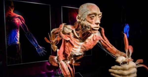 """Sở VHTT ra văn bản tạm ngừng hoạt động triển lãm """"Sự bí ẩn đặc biệt của cơ thể người"""""""