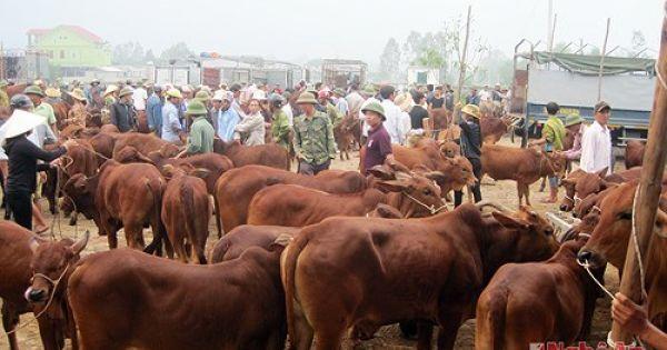 Chợ trâu, bò mọc tự phát hơn 4 năm qua nhưng không bị xử lý