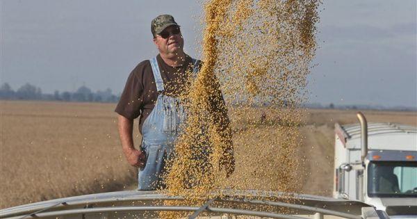 Chính quyền Mỹ muốn trợ cấp cho nông dân trồng đậu tương
