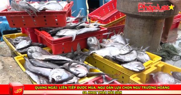 Quảng Ngãi: Liên tiếp được mùa, ngư dân lựa chọn ngư trường hoàng sa khai thác hải sản