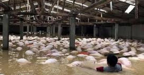 Thanh Hóa: Cơn bão số 4 khiến 3 người thiệt mạng và mất tích, hàng ngàn ngôi nhà bị nước nhấn chìm