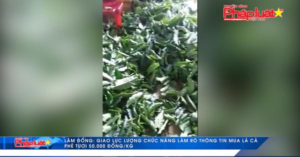 Lâm Đồng: Làm rõ thông tin mua lá cà phê tươi 50.000 đồng/kg