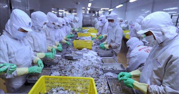 Xuất khẩu hải sản sang EU bị tác động mạnh bởi thẻ vàng IUU