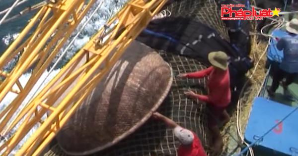 QUẢNG NGÃI: Đánh giá hiệu quả của tàu cá đóng mới theo nghị định 67