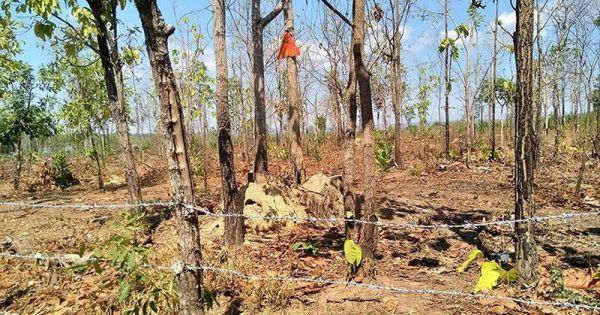 Ðắk Lắk: Ðể mất hơn 10.500 ha rừng, Phó giám đốc vẫn được thăng chức