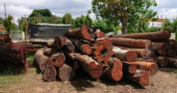 """Đắk Nông: Trạm trưởng trạm kiểm lâm nhận tiền hối lộ của trùm gỗ lậu Phượng """"râu"""""""