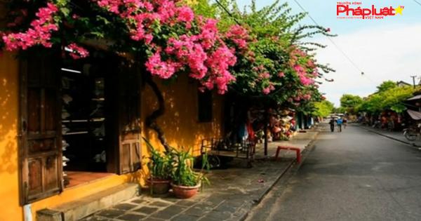 Ngẩn ngơ giữa phố cổ Hội An đẹp xiêu lòng mùa hoa giấy khoe sắc