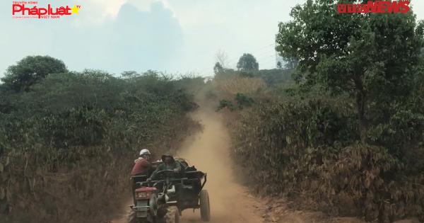Thâm nhập bãi tập kết hàng nghìn tấn than bùn khai thác trái phép ở Đắk Nông