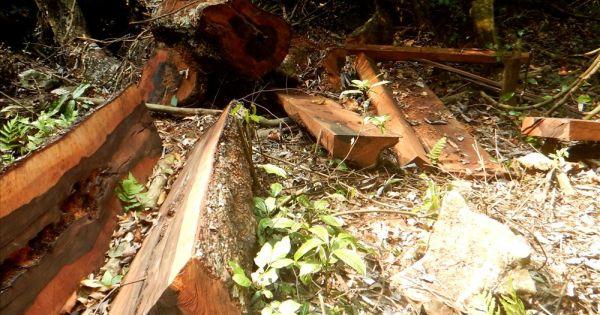 Kỷ luật nhiều cán bộ kiểm lâm vụ phá rừng tại Phong Nha - Kẻ Bàng