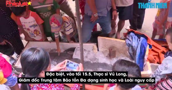 Cá lạ trên sông Cổ Chiên là loài cá nược tưởng đã tuyệt chủng ở Việt Nam