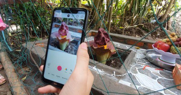 Kiên Giang: Hàng trăm người tụ tập đến xem cúng vái bông hoa lạ