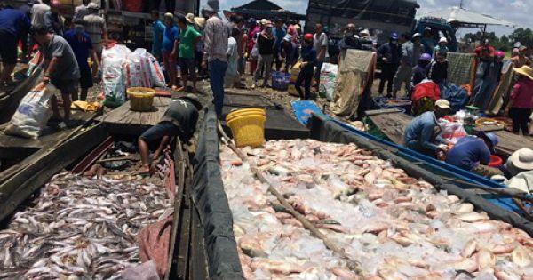 1.000 tấn cá bè chết trên sông La Ngà: Do ô nhiễm hữu cơ vượt quy chuẩn