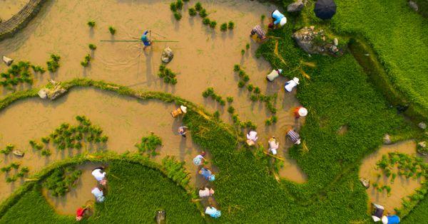 Mùa nước đổ đẹp như tranh vẽ ở Lào Cai
