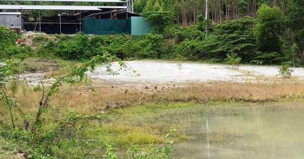 Bình Định: Doanh nghiệp bị thu hồi Giấy phép khai thác quặng Galenit và vàng