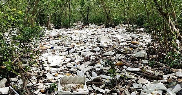 Rừng ngập mặn ven biển Hải Phòng bị phủ kín bởi rác thải