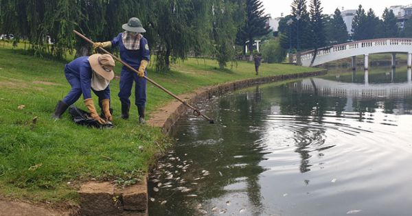 Kinh hoàng cảnh cá chết bất thường hàng trăm kg trên hồ Bảo Lộc