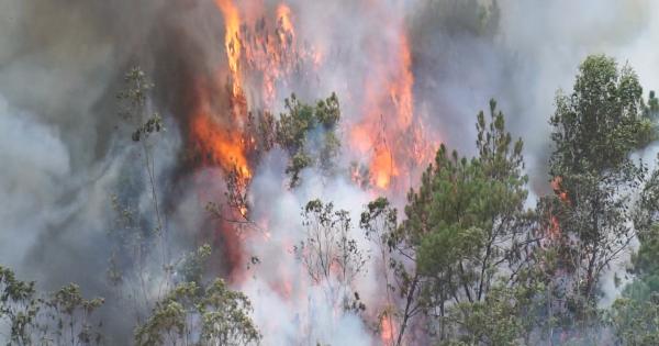 Đà Nẵng: Một khu rừng bốc cháy dữ dội