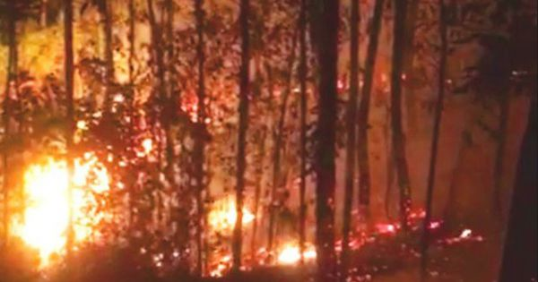 """Tìm ra """"thủ phạm"""" gây ra vụ cháy rừng thông già gần lăng vua Khải Định"""