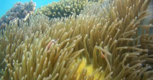Khám phá hành trình đi bộ dưới đáy biển ngắm san hô ở Phú Quốc