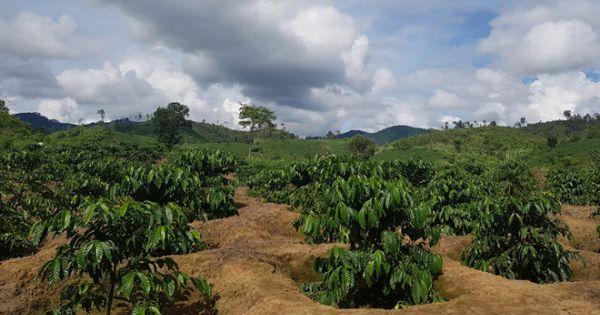 Gia Lai: Một xã để mất hàng trăm héc ta rừng