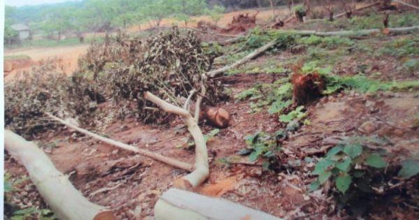"""Quảng Ninh: Ai chịu trách nhiệm """"phù phép"""" đất rừng phòng hộ"""