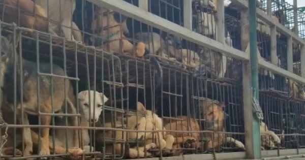 Kêu gọi người dân không ăn thịt chó tại TP HCM