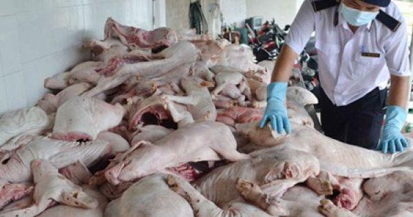 """Quảng Trị: Bắt giữ 1,2 tấn """"lợn sữa"""" đông lạnh không rõ nguồn gốc"""
