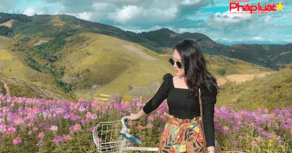 Đồi hoa tím biếc tựa trời u thu hút giới trẻ Việt check-in