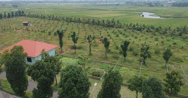 Kiểm điểm Giám đốc Sở KH-ĐT Hà Nội vụ giao đất trái luật cho mẹ và chị gái