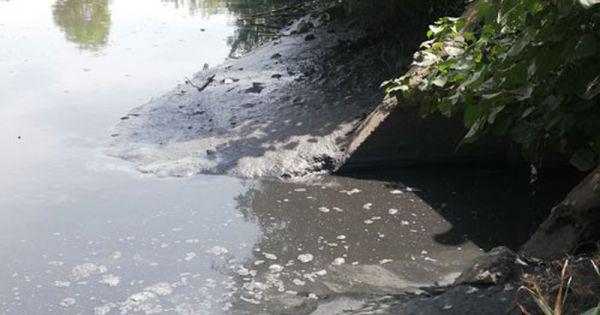 Xả thải vượt chuẩn ra môi trường, một doanh nghiệp ở Cà Mau bị phạt 360 triệu đồng