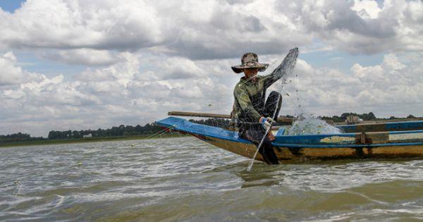 Tây Ninh nghiêm cấm đánh bắt cá tại khu vực thả cá giống hồ Dầu Tiếng