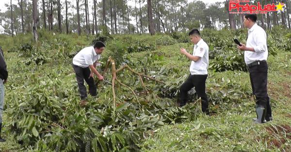 """Lâm Đồng: Ai """"bảo kê"""" để Công ty An Phú Nông ngang nhiên cưỡng chế đất của dân?"""