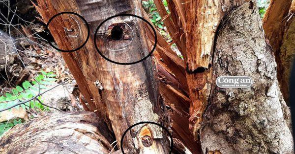 Gia Lai: Lâm tặc liên tục đe dọa, hành hung nhân viên giữ rừng