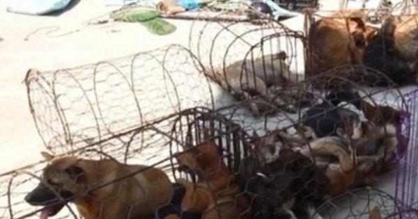 Thanh Hóa: Bà lão điều hành đường dây trộm chó